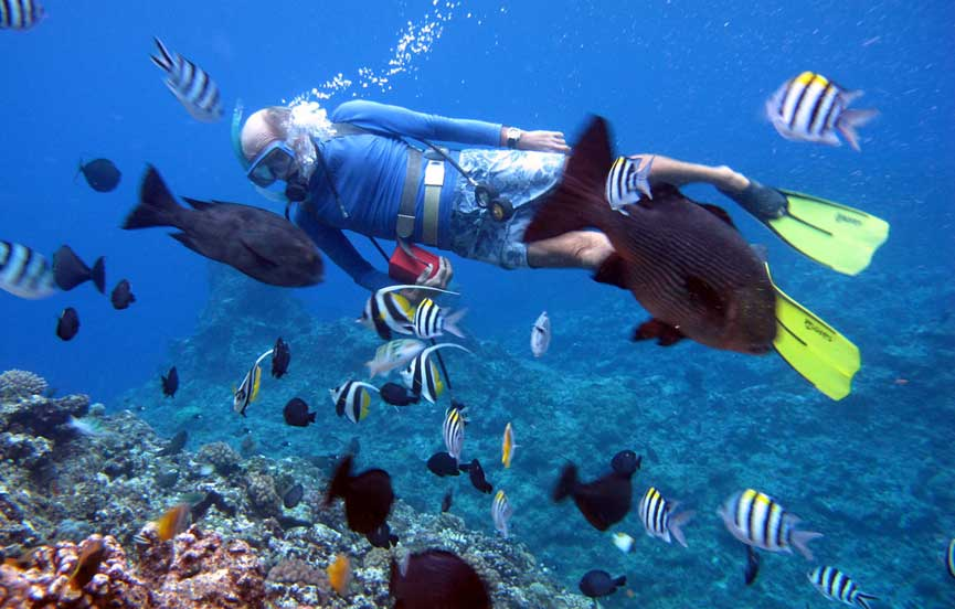 Diving among the fishes in the Indian Ocean