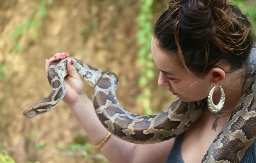 A python on display at the Snake Farm