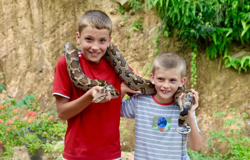 Exotic snakes awaiting release at the snake farm Matara